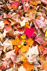 Leaves9051-EditTR