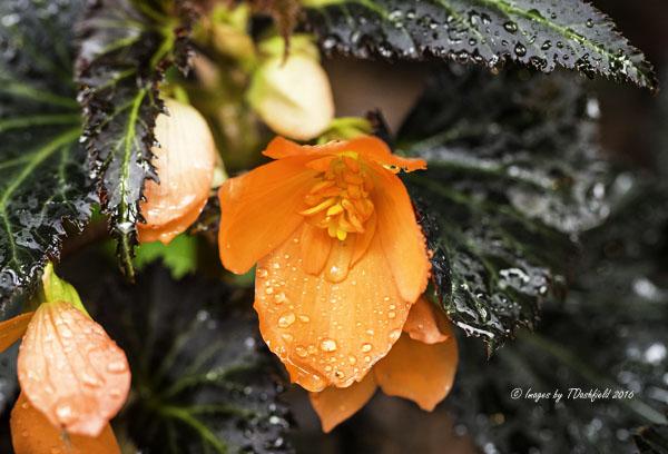 OrangeFlower7514-Edit copy